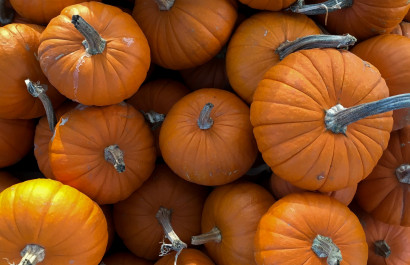 Best pumpkin patches in Houston Copy