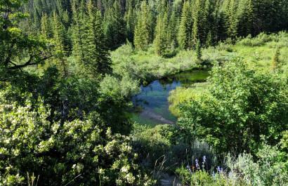 Hike- Granite Flats Trailhead