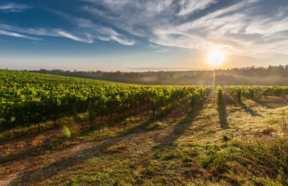 Sonoma Wineries You Might Want to Check Out!