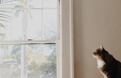 Tips When  Moving with Pets in a New Home