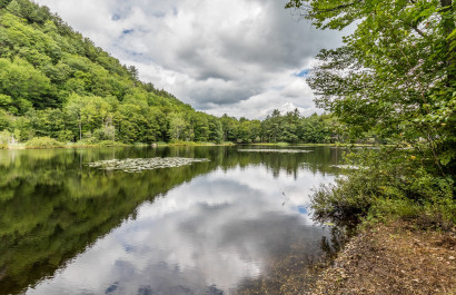 Our Neightborhood Spotlight: Lakes and Ponds