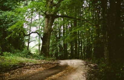 Roseville's Favorite Walking/Running/Biking Trails