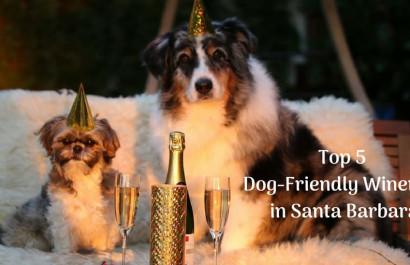 Top 5 Dog Friendly Wineries in Santa Barbara