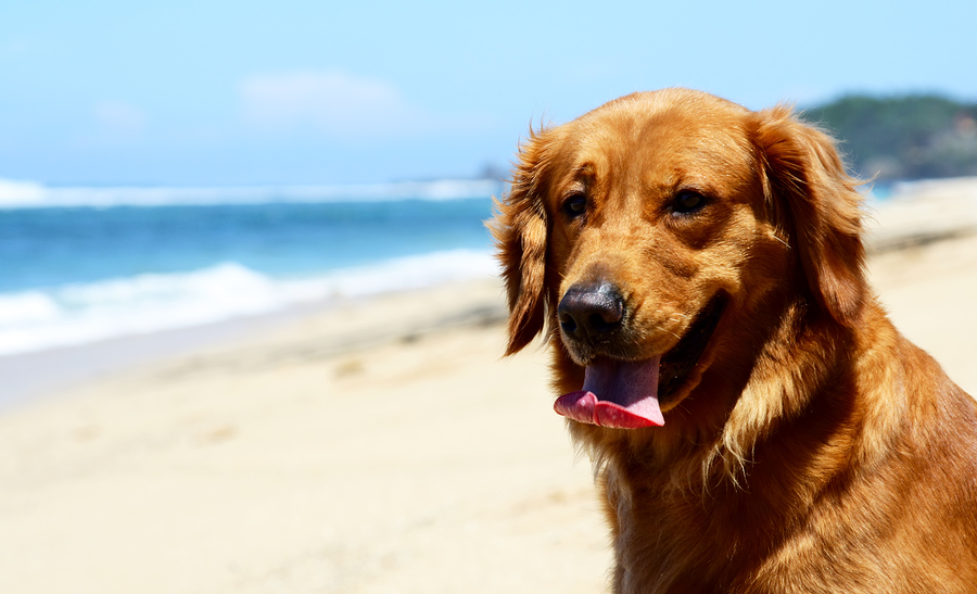 Live in Santa Barbara and go to the dog beach.