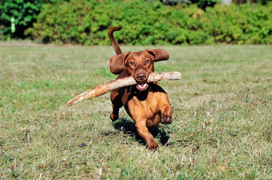 Dogs from Santa Barbara homes play at Tucker's Grove.