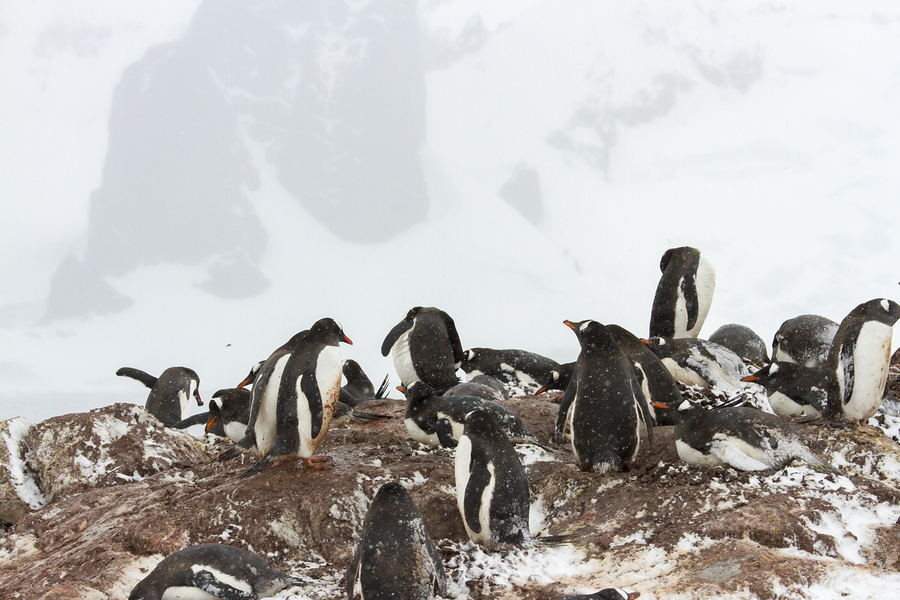 Learn about Antarctica near your Santa Barbara home.