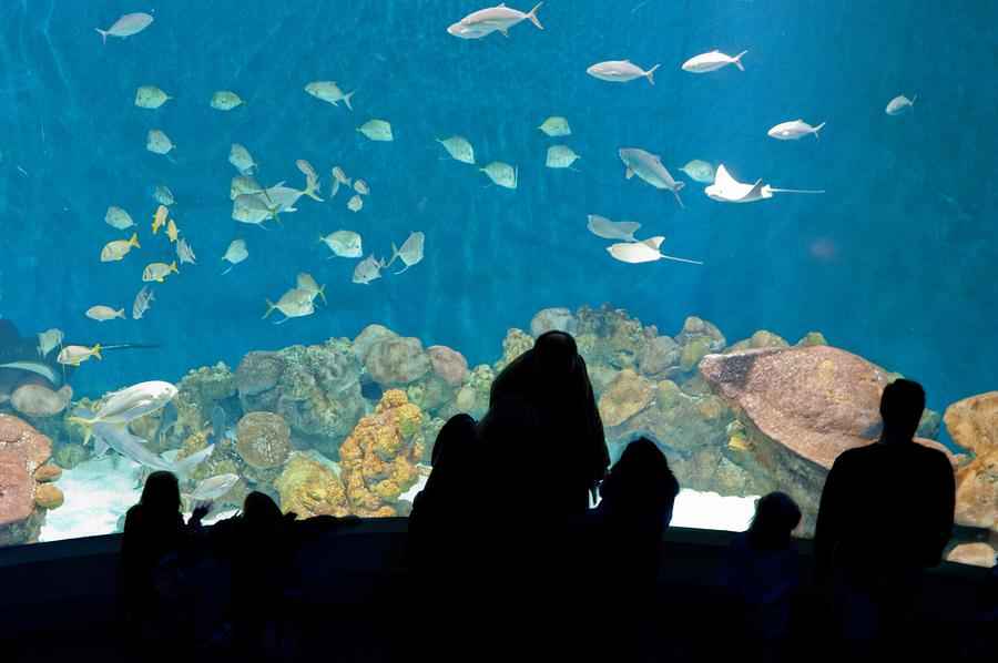 Santa Barbara property owners go to the ocean museum.