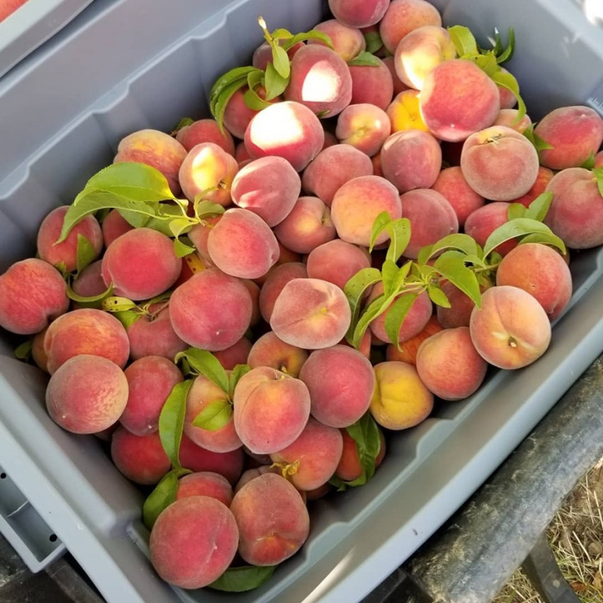 Peaches & Outdoor Market
