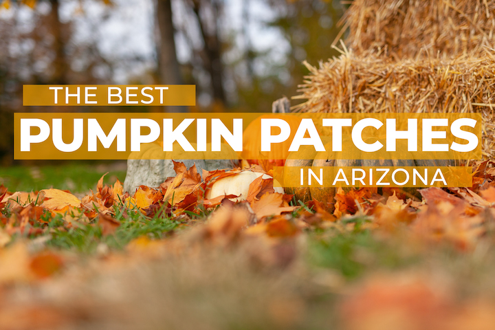 Best Pumpkin Patches in Arizona