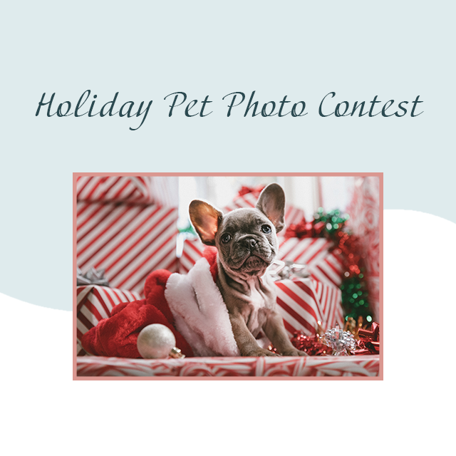 Holiday Pet Photo Contest