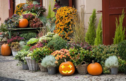 Fall Planting Tips