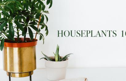Houseplants 101