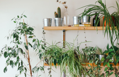 The Best Indoor Plants Even You Can't Kill