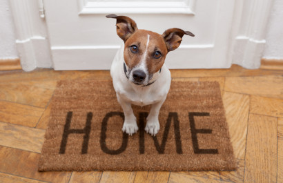 How To Prepare Your Home Before Getting A Pet