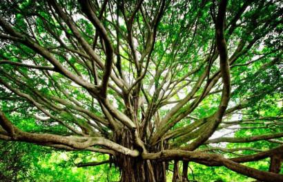 Nurturing Nature with Tree Works