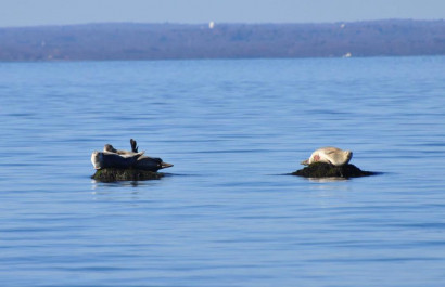 Best Whale, Dolphin & Seal Sighting Spots On Long Island!