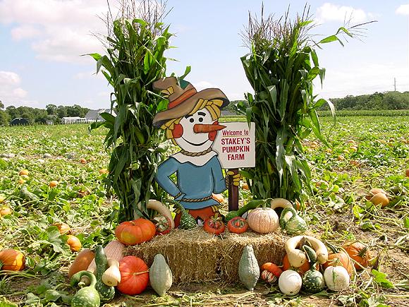 Long Island Fall Fun Guide Festivals Pumpkins Hay Rides