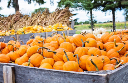 Long Island Fall Fun Guide: Festivals, Pumpkins, Hay Rides, Mazes & More!