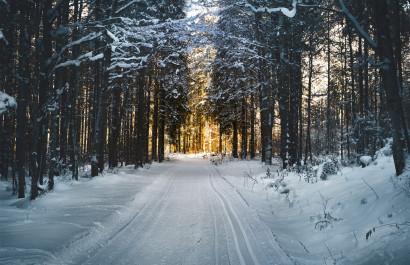 Fall & Winter Hikes, Runs & Walks In The Huntington /Five Harbors Area