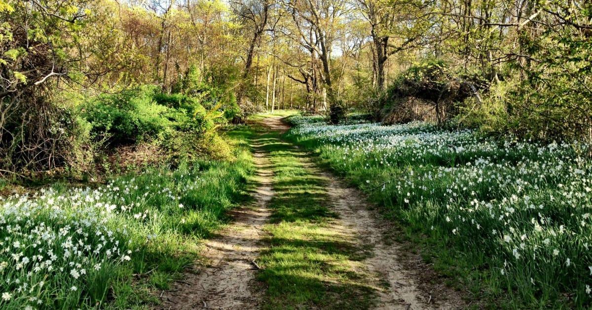 Spring & Summer Hikes, Runs & Walks On Long Island