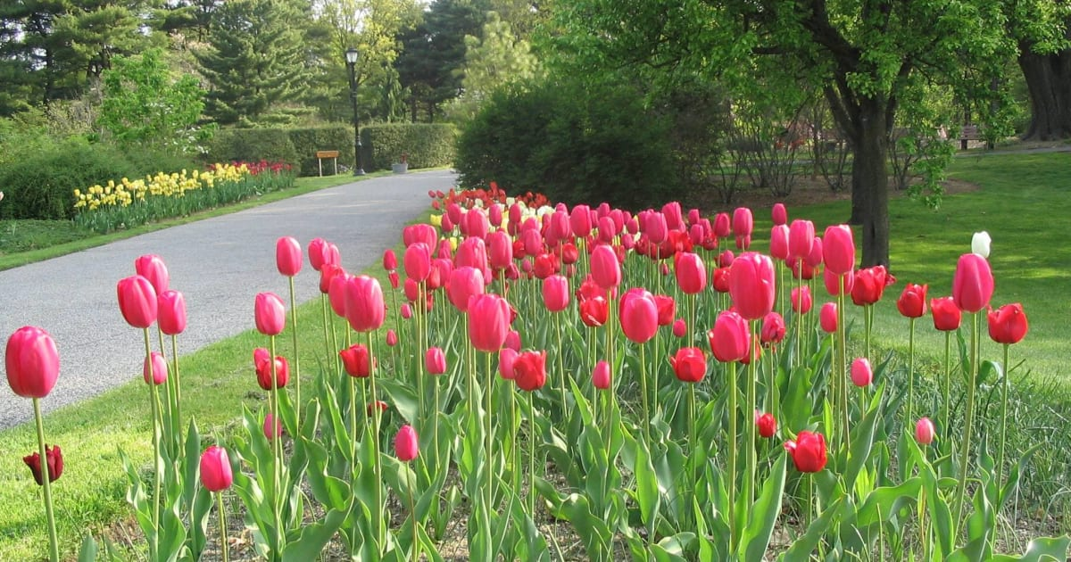 Spring Blooms, Gardens & Festivals on Long Island