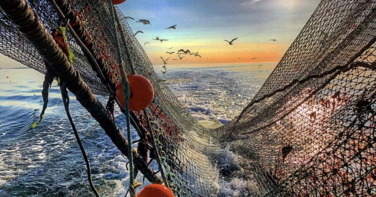 Reel One In! Fishing Charters & More on Long Island