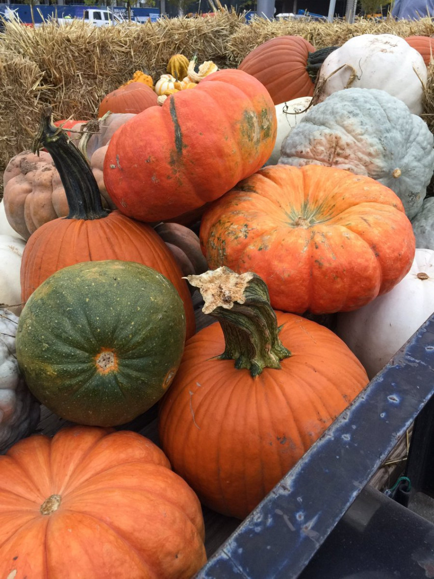 Scissortail Park Fall Market