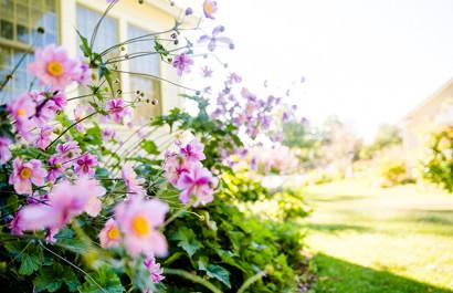 Housing Market Bloom