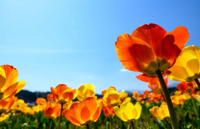 Spring Events in Chicago's Western Suburbs