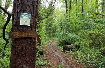 Ashford Forest Preserve