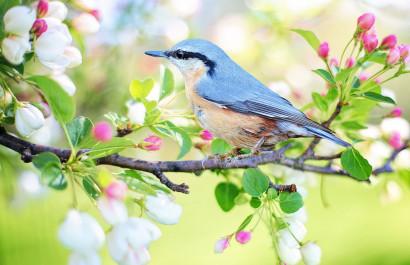 Spring Fling: Top Things To Do in Savannah