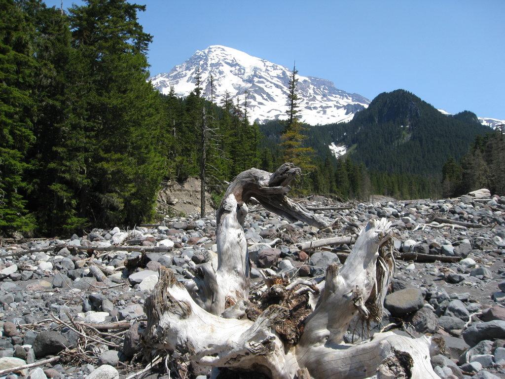 Best of Mount Rainier National Park, WA