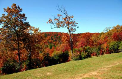 Fall Festivals, Foliage, and Football | Live Love Atlanta Real Estate of Marietta, Georgia