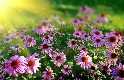Planting a Low Maintenance Garden To increase Your Charlotte Property's Value