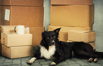 Move With Your Pets in 4 Easy Steps