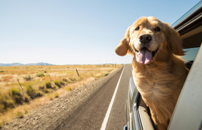 Take away the stress of moving with your pets