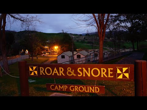 Roar & Snore Safari