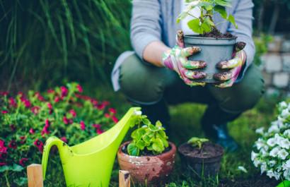 Prepping Your Garden for a Virginia Spring