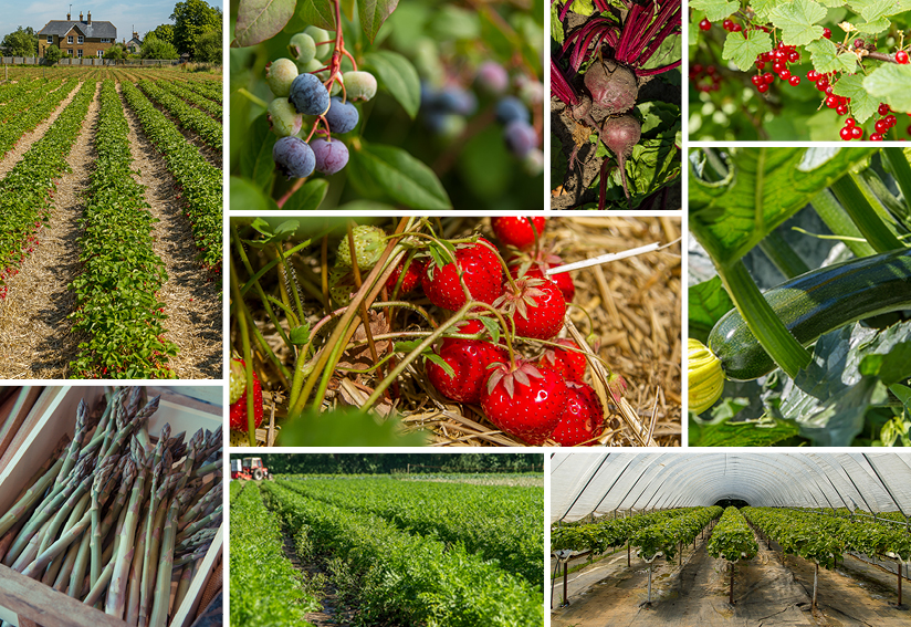 8 Fabulous Pick Your Own Farms In Virginia