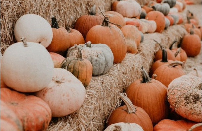 11 North Georgia Pumpkin Patches to Visit This Fall