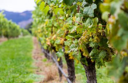 Ellijay Georgia Family Owned Winery