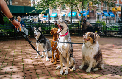 8 Dog-Centric Local Businesses