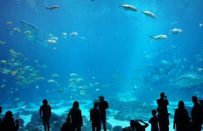 Zoos, Aquariums & Wildlife Centers in Dallas-Fort Worth