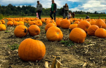2020 Guide to Pumpkin Patches in DFW