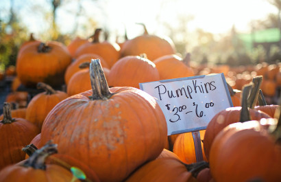 2021 Guide to Pumpkin Patches in DFW