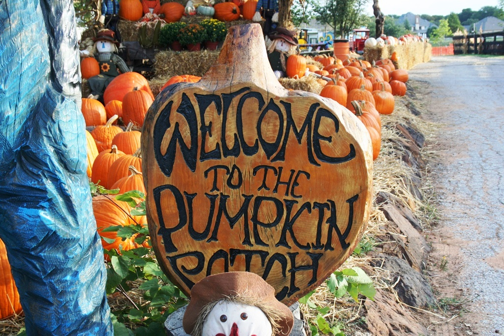 A family's guide to pumpkin patches in arlington this fall.