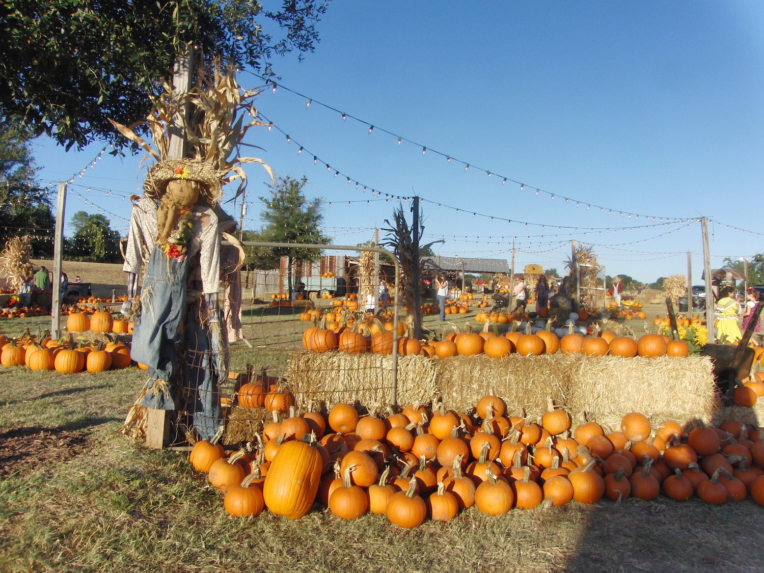 2018 Guide To Pumpkin Patches Fall Festivals In Dfw