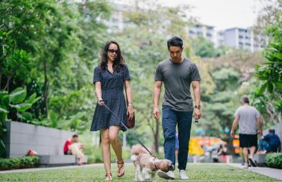 Dog-Friendly Activities in DFW