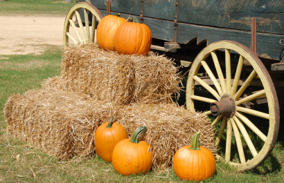 2019 Guide to Pumpkin Patches & Fall Festivals in DFW