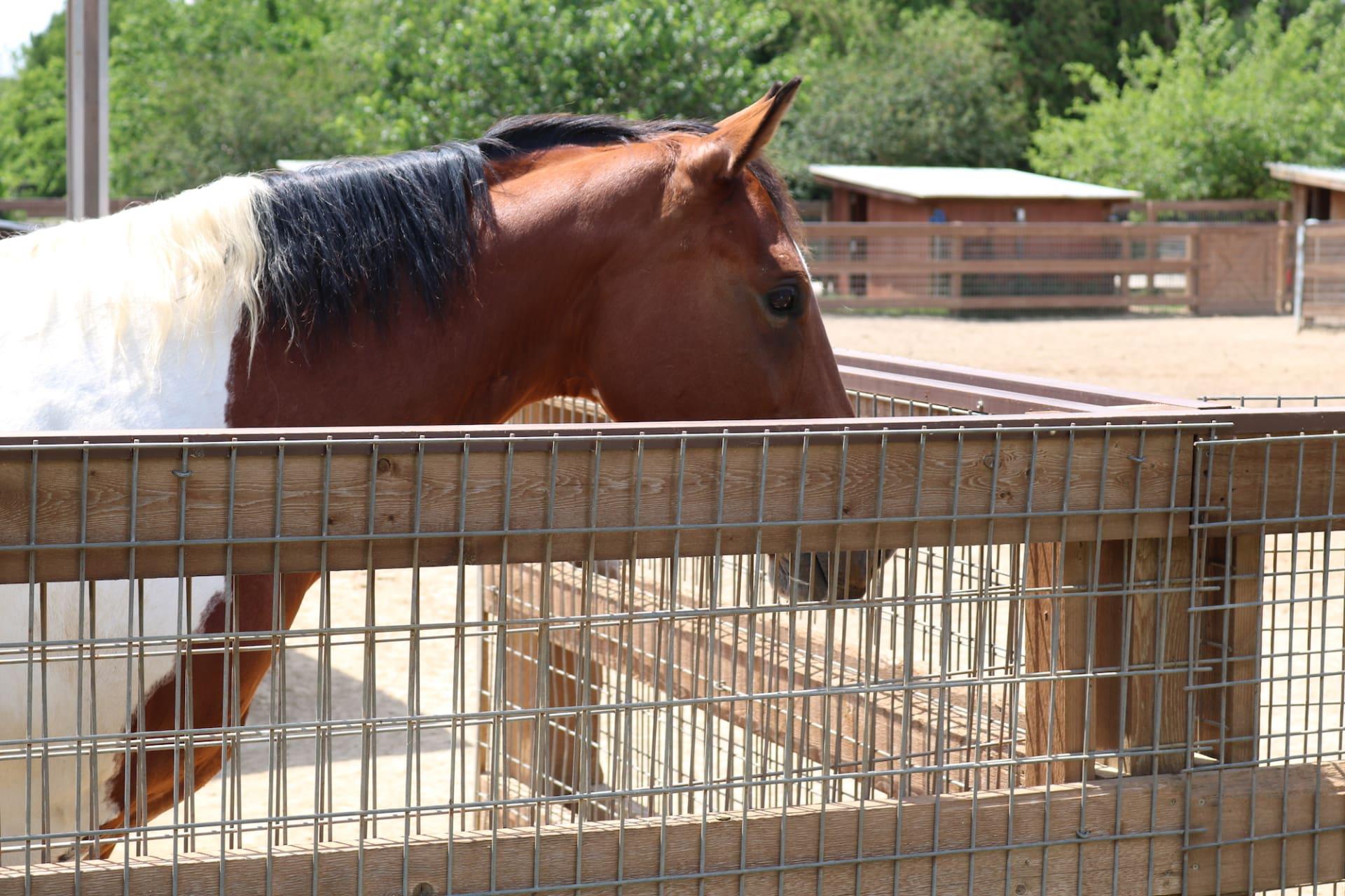 Denton County Giving: Ranch Hands Rescue